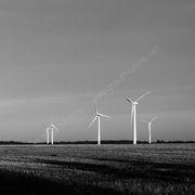 Wind Farm Monochrome