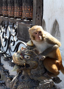 Monkey Warrior (2015)