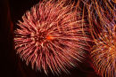 Celabration.A vibrant image of a firework.Jpg