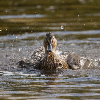 Female having a bath