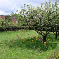 Orchard at Boscobel House