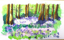 Bluebell wood by Christy 28/4/2012