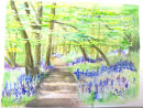 Lesley's bluebell wood painting