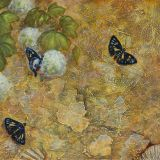 Living Fossil Snow Ball bush & Regent Skipper Butterflies