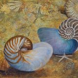 Living Fossil, Nautilus and Star Fish