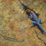 Living Fossil Red Headed Agama Lizard