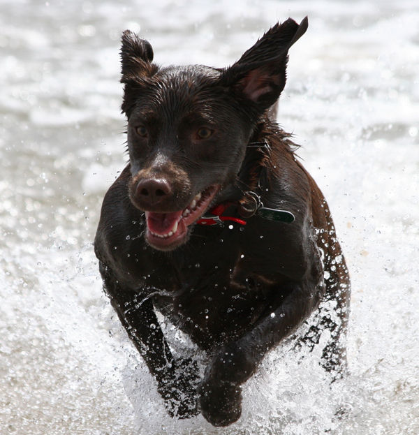 Cocoa in the Surf