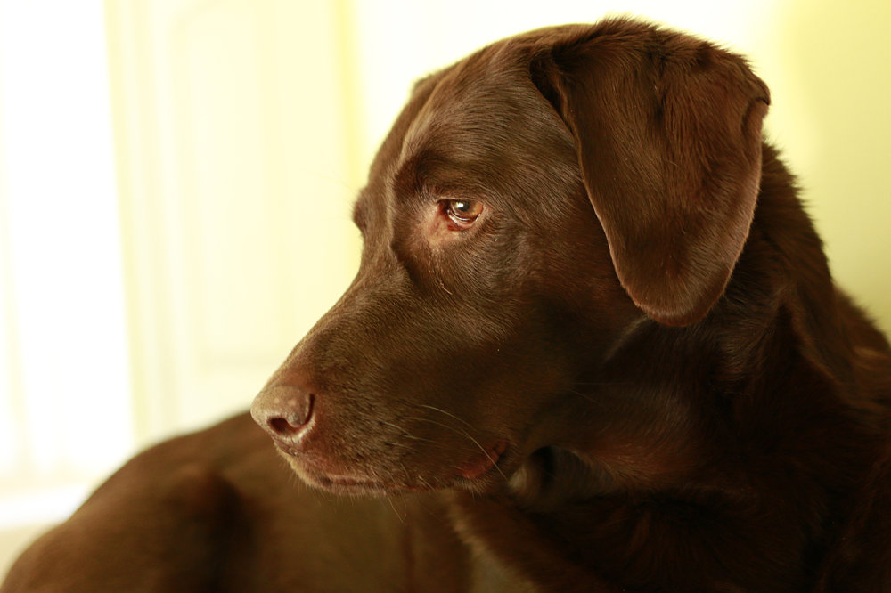 Cocoa Portrait