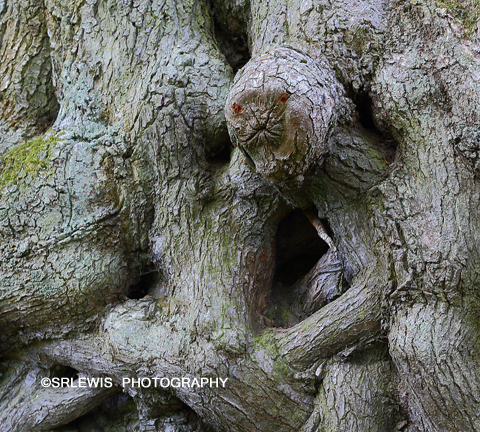 Wood 9