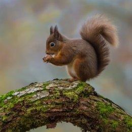 Nut Happy
