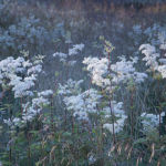 Cloatley Meadows