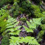 Fern and mosses