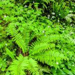 Ferns Bybrook Valley