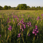 Green winged orchids