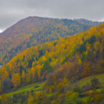 Aspens and Beech