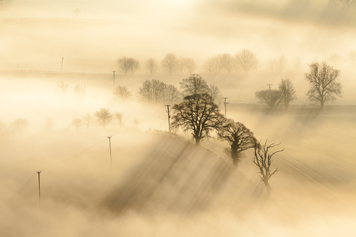 Trees and dawn mists