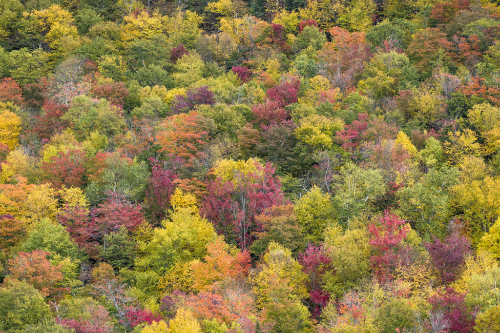 Rainbow Forest New Hampshire