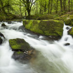 Golitha Falls National Nature Reserve
