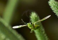 15-sawfly