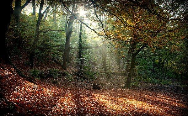 Oaks Wood