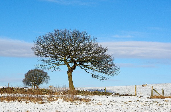 Winter at Chapeltown