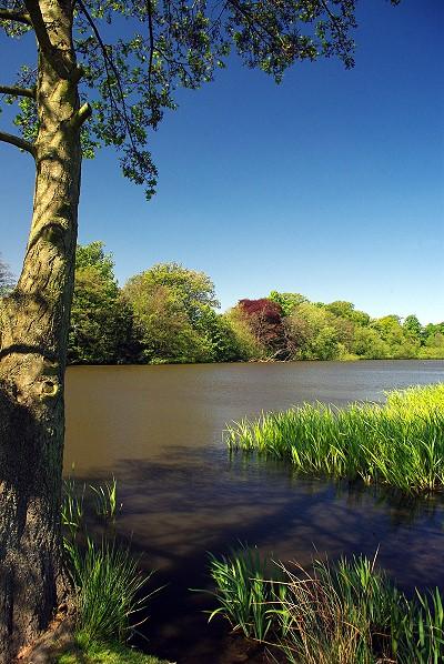 Poynton Park Lake