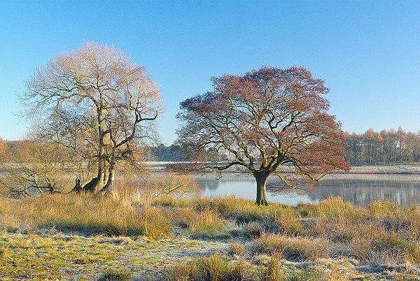 Frosty morning.