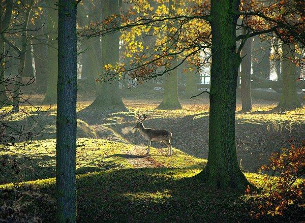 A Deer's Breath
