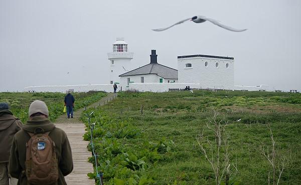 Lighthouse On Inner Farne