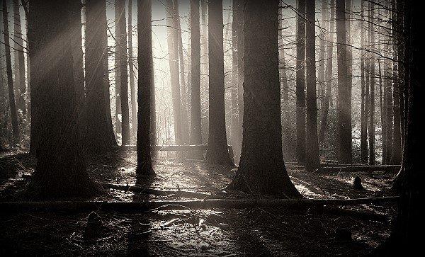 In the dark, creepy woodland