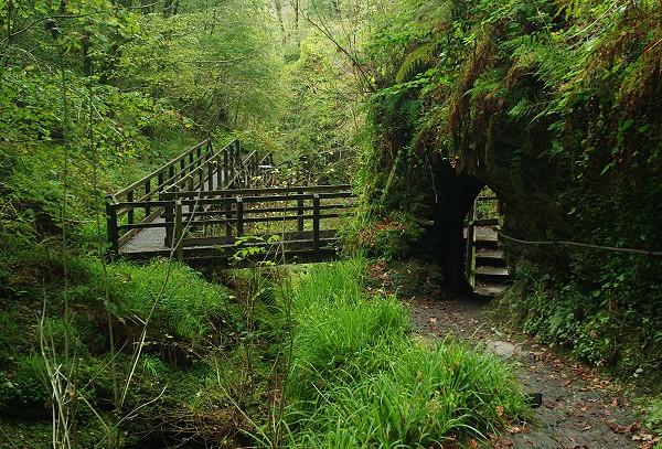 Path through Lydford Gorge