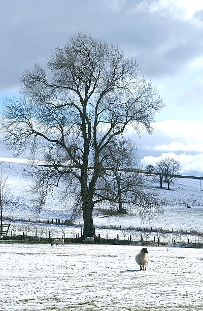 Snow scene near Winterburn