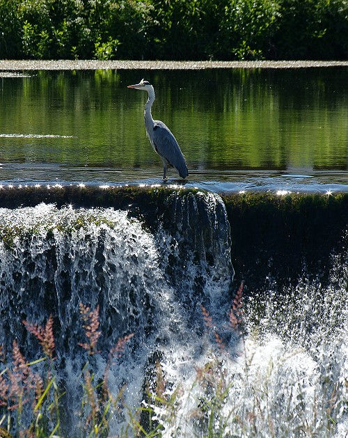 Heron Cooling Off
