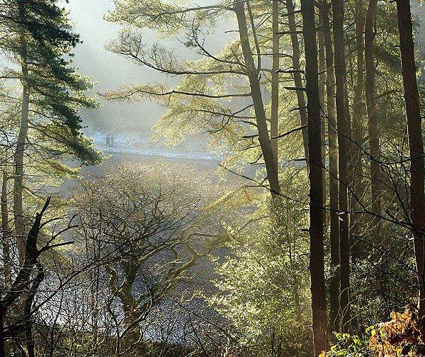 A view through woodland