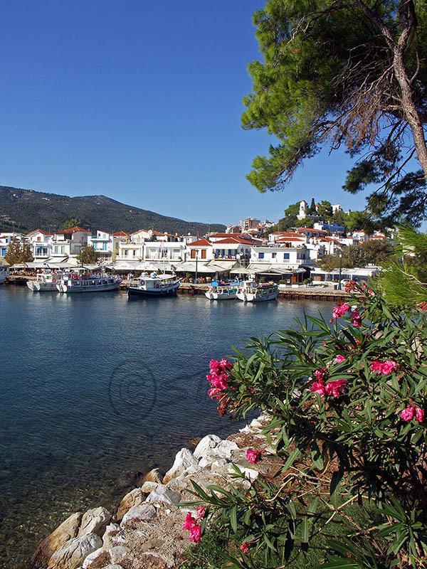 Skiathos Town Harbour. (c).
