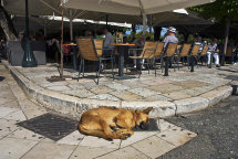 Sleeping Dog in Corfu Town.