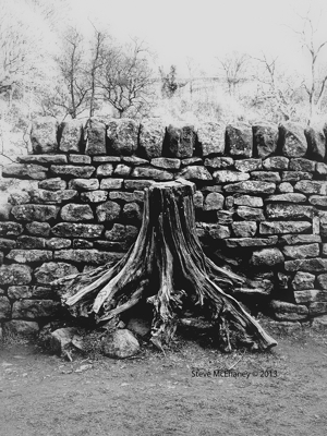 Just Another Tree In The Wall 03