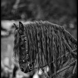 Company_Of_Horsemen_01
