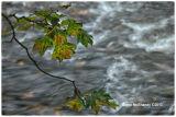 Flowing_Water_#01