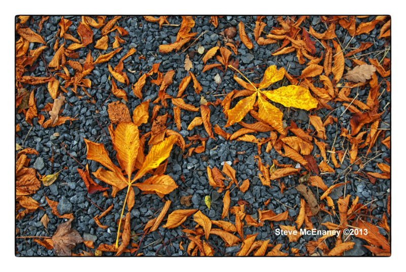 Autumn_Leaves_#01