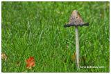 Mushroom_#01