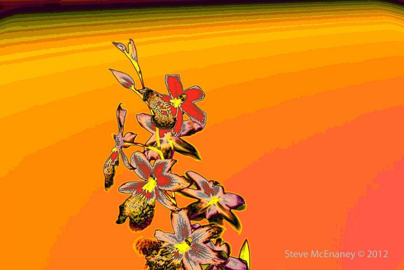 Pop Art Orchid