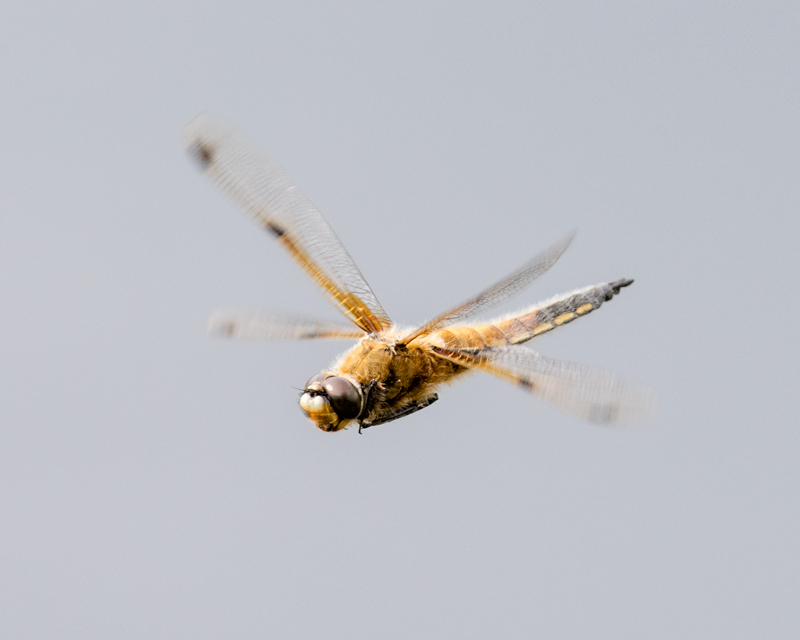 4 spot in flight