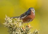 An obliging bird