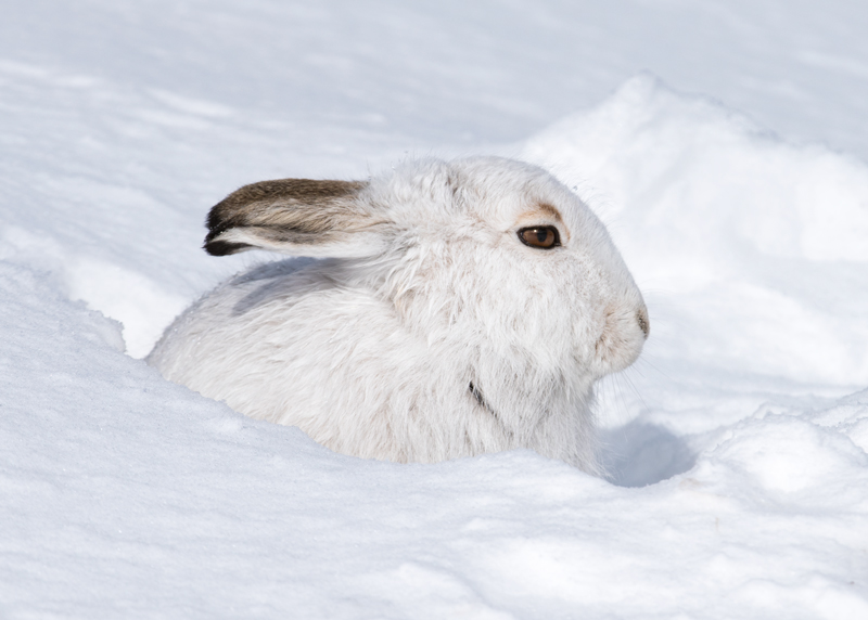 My Snow Hole