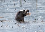 Otter plus 1