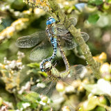 Pr Southern Migrant Hawkers