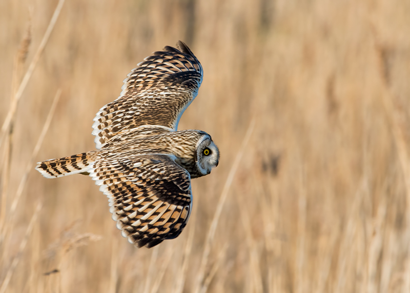 SEO fly-by