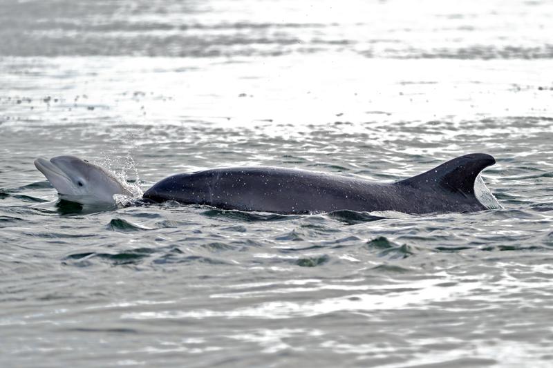 Squatfin with calf