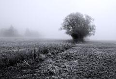 Mist & Frost II